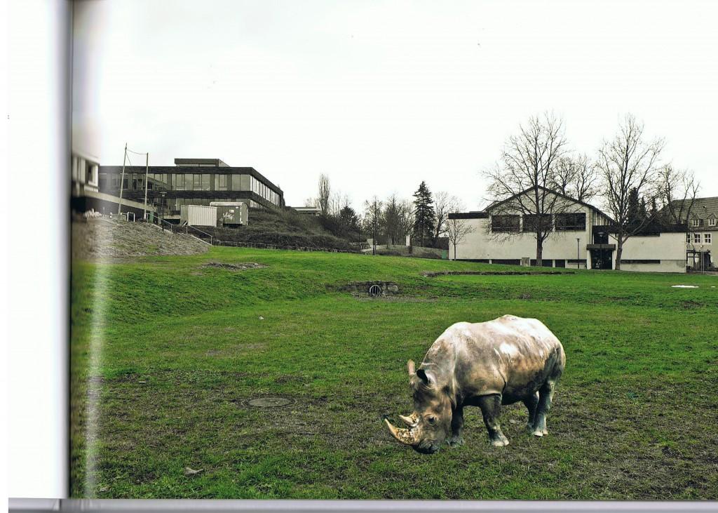 wildes dußlingen Rhinozerus